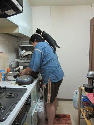 20100815_kinobori