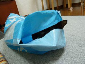 20110122_atama_r
