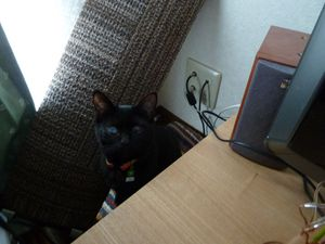 20110324_sumi01_r