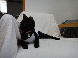 20110608_achikochi01_r