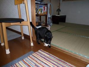 20111009_jump03_r