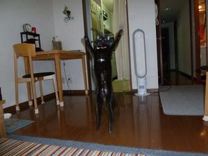20111009_jump_masugu_r
